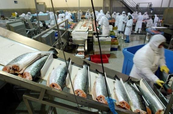 В Курганской области во II квартале начнет работу новый рыбоперерабатывающий комплекс