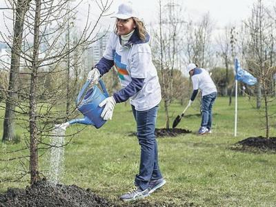 Практически 500 деревьев высадят наСадовом кольце к18ноября