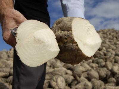 НаАлтае переработали практически 800 тыс. тонн сладкой свёклы