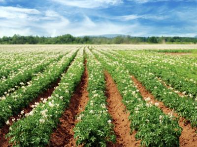 Татарстанским аграриям напокупку удобрений выделят неменее 1,7 млрд. руб.