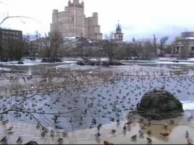 Раздничная программа ожидает гостей Московского зоопарка 12февраля