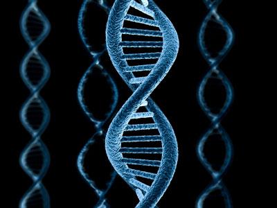 Ученые узнали, как популяции избавляются отвредных мутаций