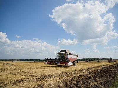 ВРеспублике Беларусь собрано уже 5 млн тонн зерна