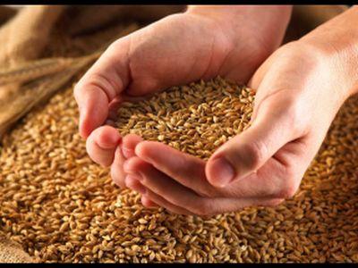 Российская Федерация может повторить рекорд нынешнего года поурожаю зерна
