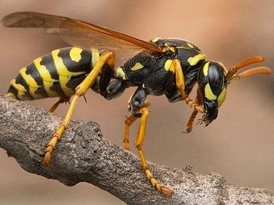 ВГермании осы помогли милиции задержать пытавшегося сбежать правонарушителя