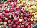 В Геленджике украли яблоки на 90 тыс. руб.
