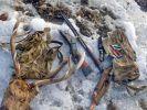 """На """"Земле леопарда"""" в Приморье задержаны браконьеры с добычей"""