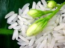 FAO and IRRI have agreed to cooperate more closely to support sustainable rice production