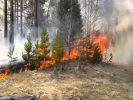 Пожароопасный период объявлен в донских лесах