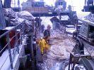 Почти 500 тонн минтая могут добыть рыбаки во время беринговоморской путины