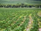 Аграрии Приморья перевыполнили план по посеву сои