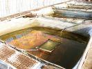 Глава Росрыболовства посетил рыбоперерабатывающий комплекс на Кунашире