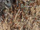 В Крыму ликвидирована угроза нашествия саранчи