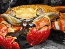 Stuff in shellfish hones medical tests