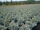В Башкортостане высадят 50 000 саженцев хвойных деревьев в рамках Года экологии