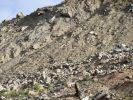 """На полигон """"Кучино"""" в Балашихе завезут 450 тыс кубометров грунта"""