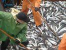 РФ и Норвегия утвердили лимиты вылова трески, морского окуня и пикши