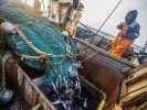 Экспорт рыбы из Приморского края вырос почти на 20%
