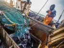 Экспорт рыбы из Приморья увеличился почти на 20%