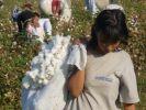 ООН: Узбекистан покончил с детским трудом