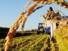 Brazil Allowed the Import of Wheat from Russia