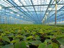 В Дагестане продолжается развитие овощеводства защищенного грунта