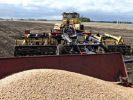 Более 2,3 тысяч гектаров засеяли пшеницей в Приморье