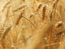 Россия снова продаёт пшеницу в Бразилию: страны заключили первую сделку после 8-летнего перерыва