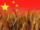 Китай планирует увеличить поставки зерновых из России