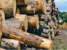 Дмитрий Медведев сообщил о миллиардных потерях из-за незаконной вырубки леса