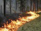 В России горит лес: пожарами охвачена территория в 700 гектаров