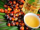 Russia Increased Palm Oil Imports by 23.8% Since the Beginning of the Year