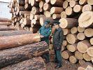 Минприроды: Китай не получит российскую древесину, пока не восстановит лес