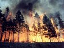 Finland Assessed Cooperation with the Ministry of Emergency Situations of Russia in the Fight Against Forest Fires