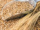 In Russia Harvested 110 Million Tons of Grain
