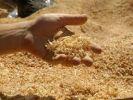 Российские учёные научились превращать опилки в биотопливо