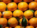The Rosselkhoznadzor Banned Import of 128 Tons of Infected Citrus Fruits from Turkey