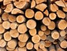 Russia Will not Ban the Export of Timber to China