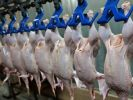 Export of Poultry Meat from Russia to China Can Reach 150 Thousand Tons Per Year