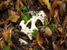 В Ижевске школьники нашли на прогулке человеческий череп