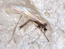 Российские учёные обнаружили комаров, способных зимовать во льдах