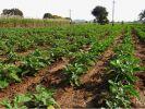 Медведев собирается ввести особый налог для сельхозпроизводителей