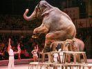 Цирки с животными запретили в Ингушетии