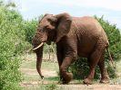 Слон убил британского солдата во время операции по борьбе с браконьерством