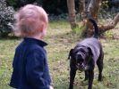В Екатеринбурге после нападения собаки на ребёнка было возбуждено уголовное дело