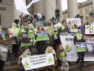 Зелёные партии Европы готовятся праздновать победу на выборах в Европарламент