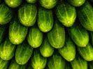 Роспоребнадзор зафиксировал рост количества овощей с нитратами