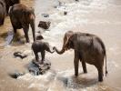 В ЮАР стадо разъяренных слонов разрушило автомобиль