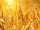 На экспорт российской пшеницы продлили нулевую пошлину
