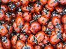 На Земле резко увеличилась скорость вымирания насекомых